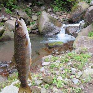 鳥居川でイワナ釣り🐟🎣(鮎タビの足慣らし)