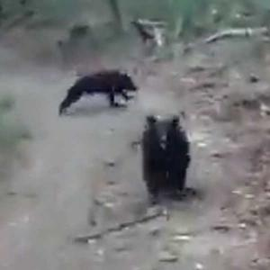 桐生市吾妻山で親子熊の動画が撮られた!