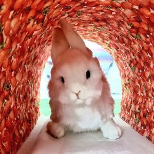 《SHOP》卯詩のトンネルちゃん∞