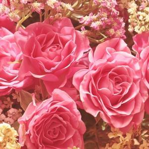 【ご紹介】Tiara陽子さま:コロリンへ ~ 愛と感謝が見せてくれる世界 ~