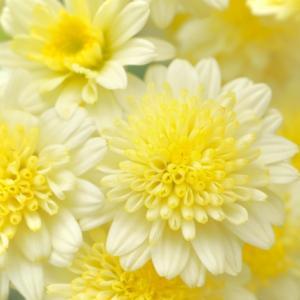 【重陽の節句☆期間限定遠隔ワーク】陽を極めて花となす ~流れを変える~