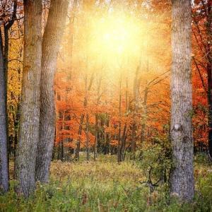 【秋分によせて:完全遠隔ワーク】人生を自分でクリエイト☆本来の光を思い出し力に変える