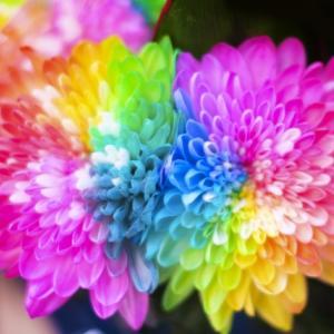 「虹色チャクラ☆自分の力を引き出す」のご感想 ~するっと言葉が出てきたよ~