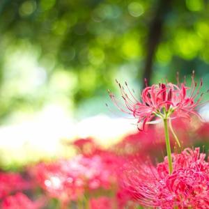 【秋のお彼岸】ご先祖さまに思いを馳せる:感謝を伝える7日間