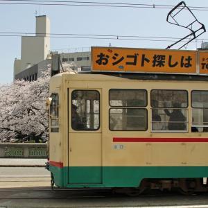 春の北陸旅行・桜満開の富山市内(6)