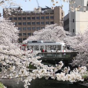 春の北陸旅行・桜満開の富山市内(7)