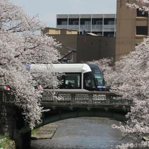 春の北陸旅行・桜満開の富山市内(8)