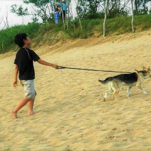 エアー犬散歩の効用は・・・