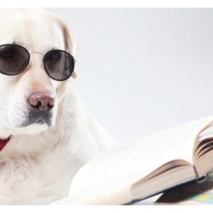 読書好きな子は国語の成績が良いってほんと?