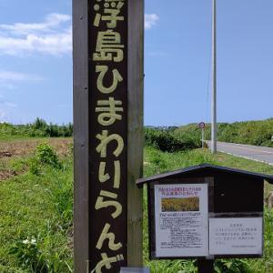 静岡県沼津市:浮島ひまわりらんど