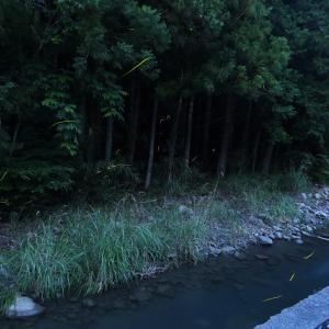 静岡市葵区:水見色のホタル