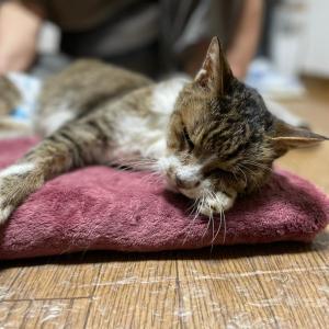 悲しいお知らせ。ムク(猫)が亡くなりました…