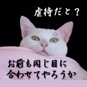 """""""猫が幸せでありますよぉに"""""""