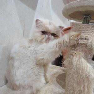 これが猫ファーストなのか