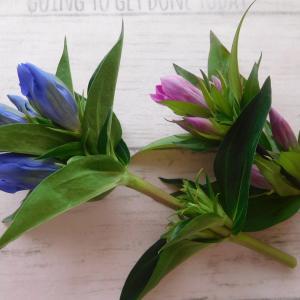 袋状のお花の押し方レッスン リンドウ、ナデシコ編