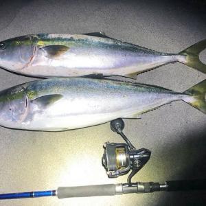 遠州灘で青物まだまだ釣れます♪♪84cm(5kg)と87cm(6kg)のまあまあサイズのブリ♪♪