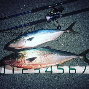 遠州灘サーフでブリの釣果