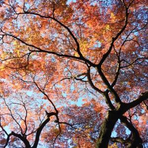 美しい紅葉の御苑散歩!