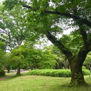 新緑公園と中華ディナー!