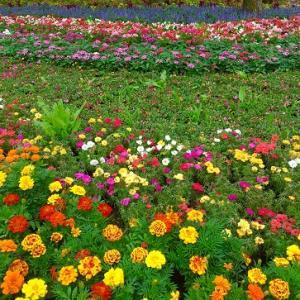 日本庭園と天ぷら!