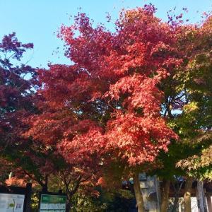 高尾山で紅葉狩り!(2)