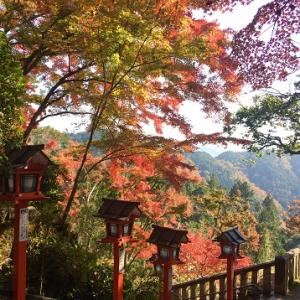 ネコちゃん京都へ行く!