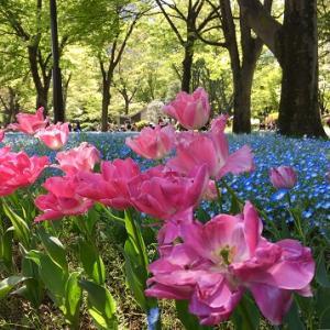 日比谷公園で花散歩!