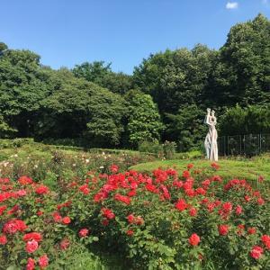 神代植物公園のバラ!