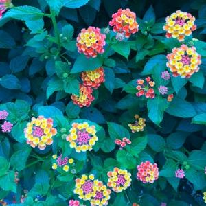 綺麗な花たちとカフェ