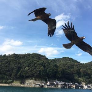 伊根の舟屋と水鳥!