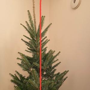 IKEAのもみの木 失敗しない買い方