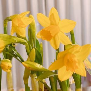一足先に春を感じる、とっておきの方法