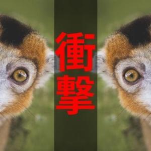 【日常】「noindex」タグでブログの質を高める意識。衝撃の事実が発覚