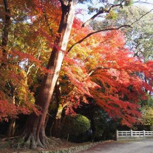 ペーター連れて京都に行って来ました