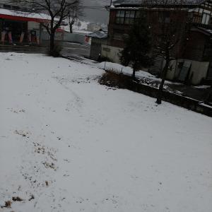 魚沼市は久々の雪