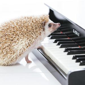 【電子ピアノ】YAMAHA CLP-745を購入!検討~購入レポ【クラビノーバ】