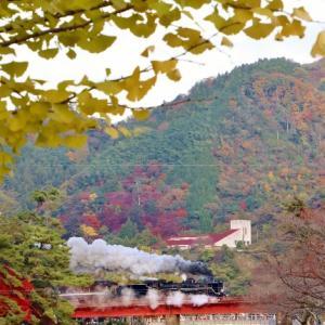 令和元年11月17日 SLやまぐち復路 狙うは津和野の紅葉とあそこの夕景。しかし・・・。