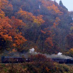 鉄紅葉、C11325は出張鉄で大忙し。飯山線