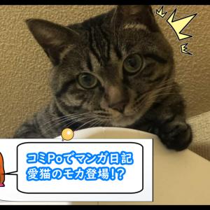 コミPoでマンガ日記 愛猫のモカ登場!?
