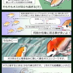 追撃のコンゴーテトラ紹介四コマ (その2)