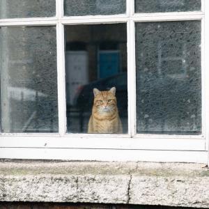 【窓拭き】に〇〇〇を使うとピカピカになるってほんと? ~みんな知ってるけど使っている人少ないのね~