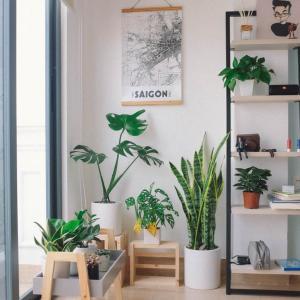 【NASA】が認める観葉植物8選 ~緑を取り入れて心穏やかな生活を~
