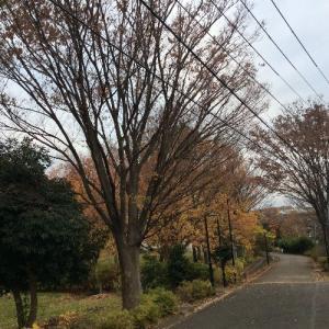 【日本に一時帰国】団地の大掃除など 紅葉の景色が身近に広がる 日本の大掃除は?