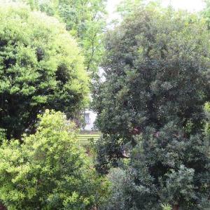 【ベランダ園芸】団地の緑 つつじの対比 『絵画みたい』というのは転倒している?