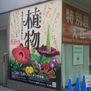【上野特別展『植物』】植物は、動く必要がない? 前篇