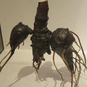 【上野特別展『植物』】動物は、植物よりエライのだろうか? 後篇
