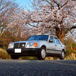 【W124】「昭和のW124」桜ロケ@岩子山の一本桜