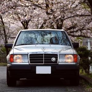 【W124】「昭和のW124」桜ロケ2020@恩田川
