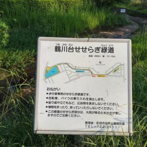 地元愛@鶴川台・せせらぎ緑道