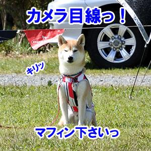 NDA朝霧大会 3日目-2